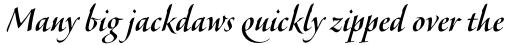 Veljovic Script Pro Medium sample